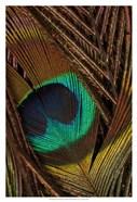 Peacock Feathers II
