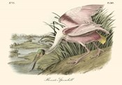 Roseate Spoonbill (light pink)