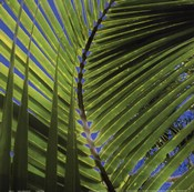 Palm Collection III
