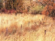 Autumn Pasture
