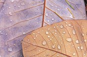 Waterdrops on Magnolia Journal