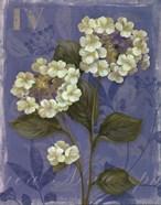 Lace Hydrangea - mini
