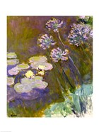 Waterlilies and Agapanthus, 1914-17