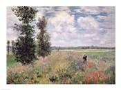 The Poppy field