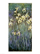 The Yellow Irises