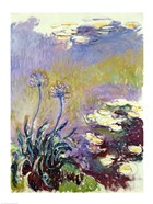 The Agapanthus, 1914-17