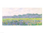 Field of Yellow Irises at Giverny, 1887