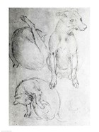 Study of a dog and a cat