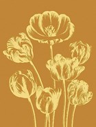 Tulip 20