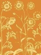 Chrysanthemum 20