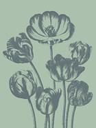 Tulip 8