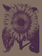 Sunflower 14