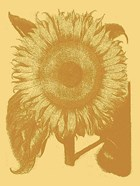 Sunflower 19