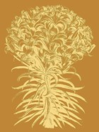 Lilies 20