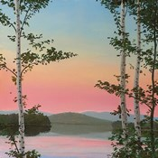 Cooper Sunset Birches