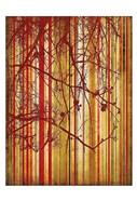 Auburn Stripe