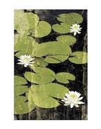 Pond Blossoms