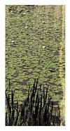 Lily Pond III