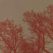 Cinnamon Tree I