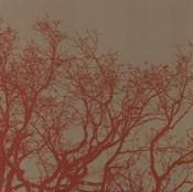 Cinnamon Tree II