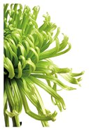 Green Bloom 2