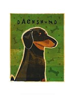 Dachshund (black and tan)
