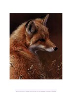 Curious- Red Fox