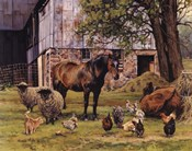 Barnyard Gathering