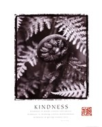 Kindness - Fiddleheads