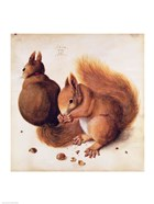 Squirrels, 1512