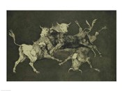 Folly of the Bulls, from the Follies series