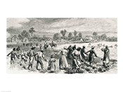 Labour in the Cotton Fields, Hoeing the Young Plants