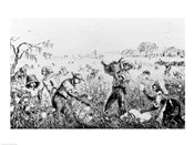 Picking Cotton on a Southern Plantation