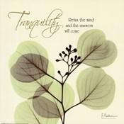 Tranquility Eucalyptus