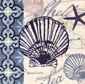 Trade Wind Scallop