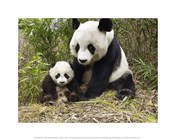 Panda Mother and Cub