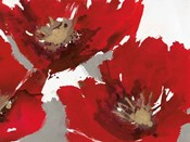 Red Poppy Forrest II