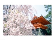 Cherry Blossom tree in front of a temple, Kyoto, Honshu, Japan