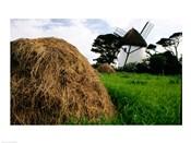 Traditional windmill in a field, Tacumshane Windmill, Tacumshane, Ireland