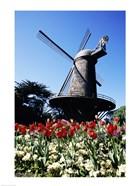 Low angle view of a traditional windmill, Queen Wilhelmina Garden, Golden Gate Park, San Francisco, California, USA