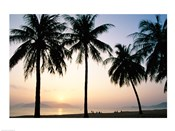 Silhouette of palm trees on a beach during sunrise, Nha Trang Beach, Nha Trang, Vietnam