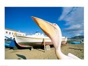 Pelican and Fishing Boats on Beach, Mykonos, Cyclades Islands, Greece