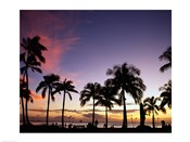 Silhouette of palm trees on the beach, Waikiki Beach, Honolulu, Oahu, Hawaii, USA