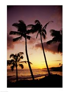 Silhouette of palm trees at sunset, Kauai, Hawaii, USA