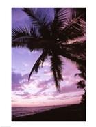 Kauai Hawaii USA Palm Tree