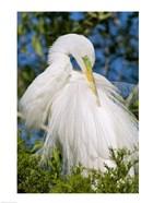 Great Egret - photo