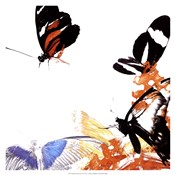 Butterfly Infloresence IV