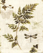 Ivies and Ferns III