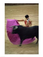 A matador and a bull at a Bullfight, Spain