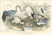 Herons, Egretsm and Cranes